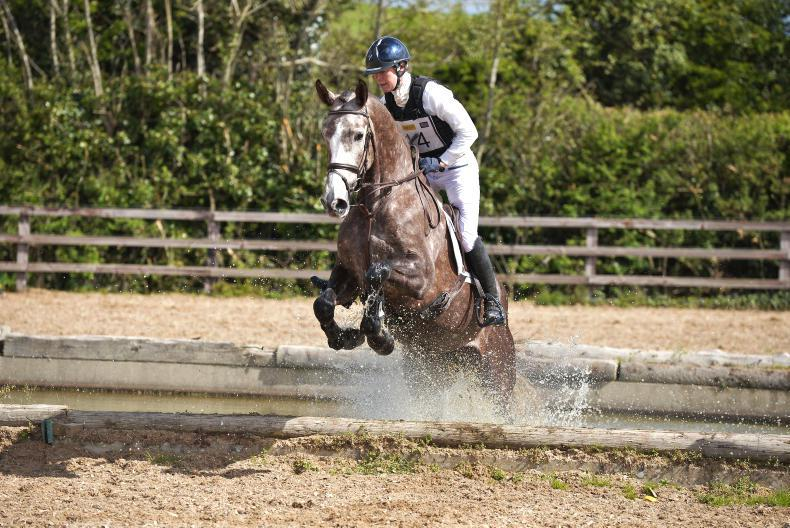 SALES:  Lively trade for eventers returns top lot of €23,000