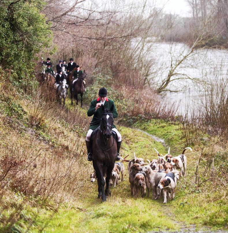 HORSE SENSE DOG FOCUS: Interested in helping out your local hunt?