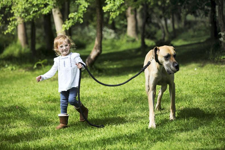 HORSE SENSE DOG FOCUS: Starting off on the right paw