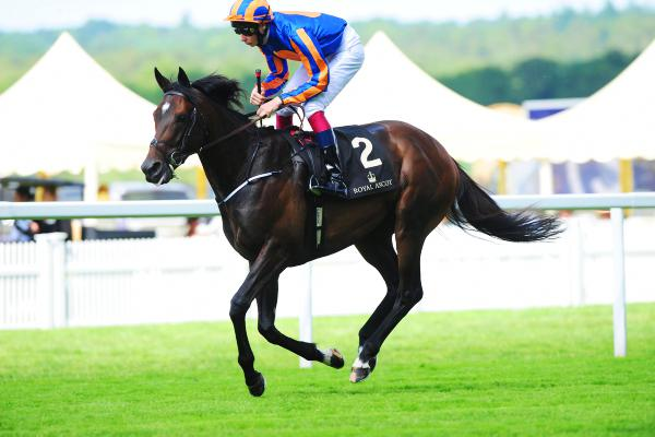 Time Will Tell: Magician has a serious chance in the King George
