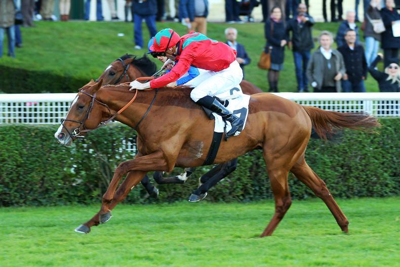 Irish Derby on the agenda for French colt Waldgeist
