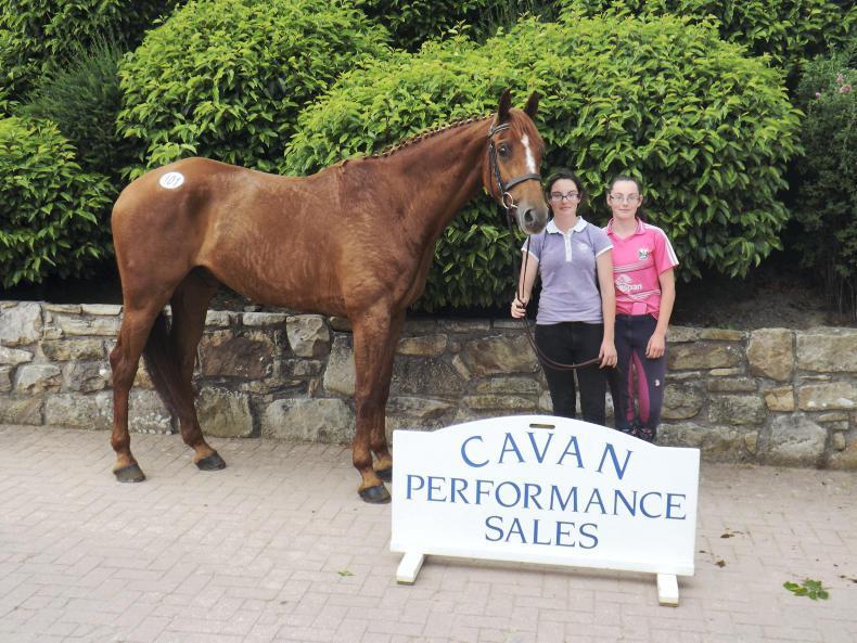 SALES: Lively trade returns top lot of €10,200 at Cavan