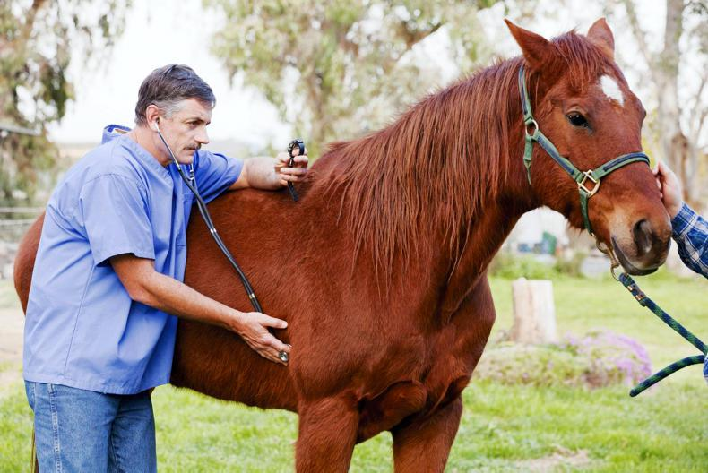 Equine vets need support from public and state