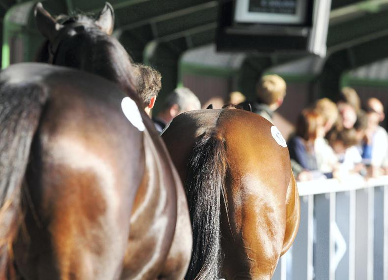 Pinhooker prices for the Goffs Land Rover and Tattersalls Ireland Derby Sale