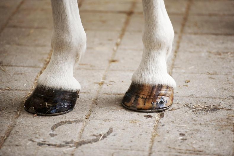HORSE SENSE HOOFCARE: The professionals' approach to hoofcare