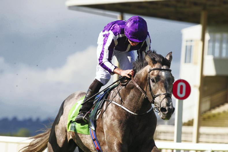 Capri hits top gear for Aidan O'Brien in Irish Derby at Curragh