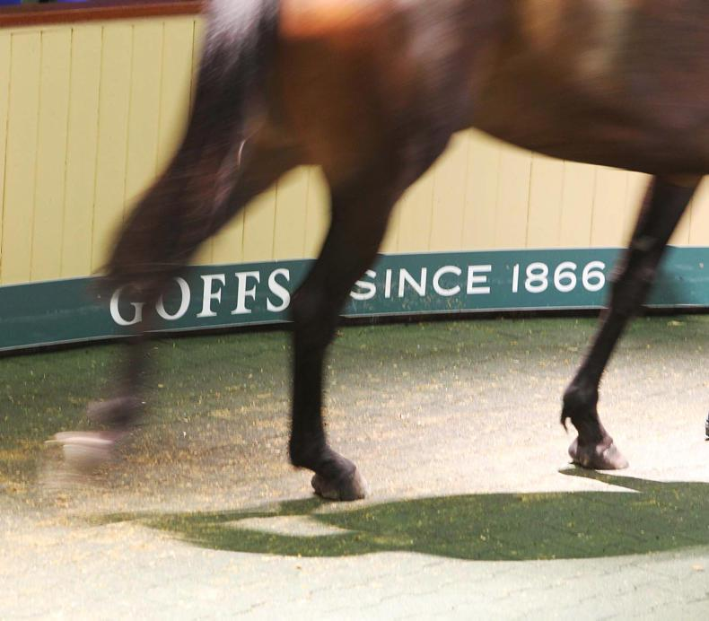 €160,000 Getaway gelding tops opening session of Goffs Land Rover Sale