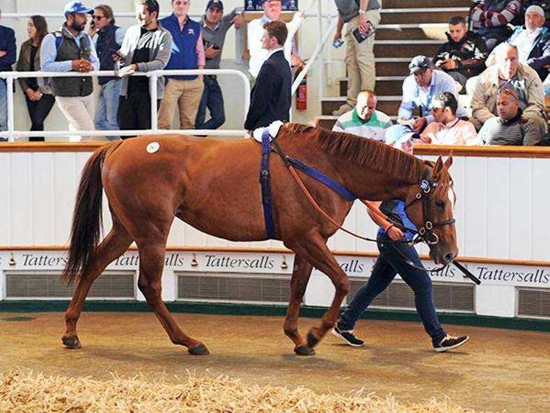 Time Check tops day one of Tattersalls July Sale at 300,000gns