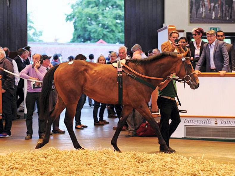 Frankel relation Jewel House tops day two in Newmarket at 215,000gns