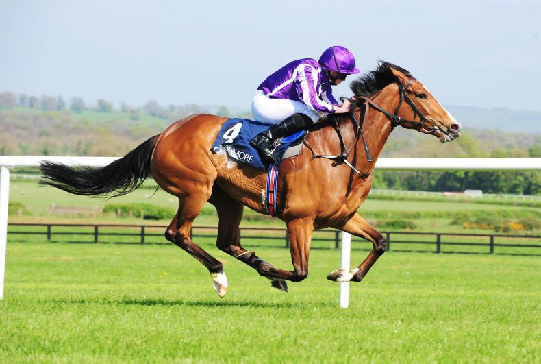 Minding retires to stud