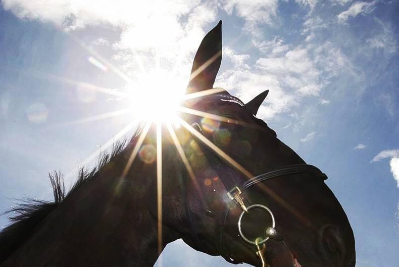 NEWS:  66 arrested over European horsemeat scandal