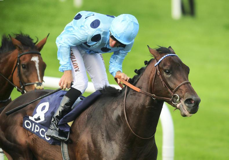 York plans scrapped for Almanzor with Deauville return now the target