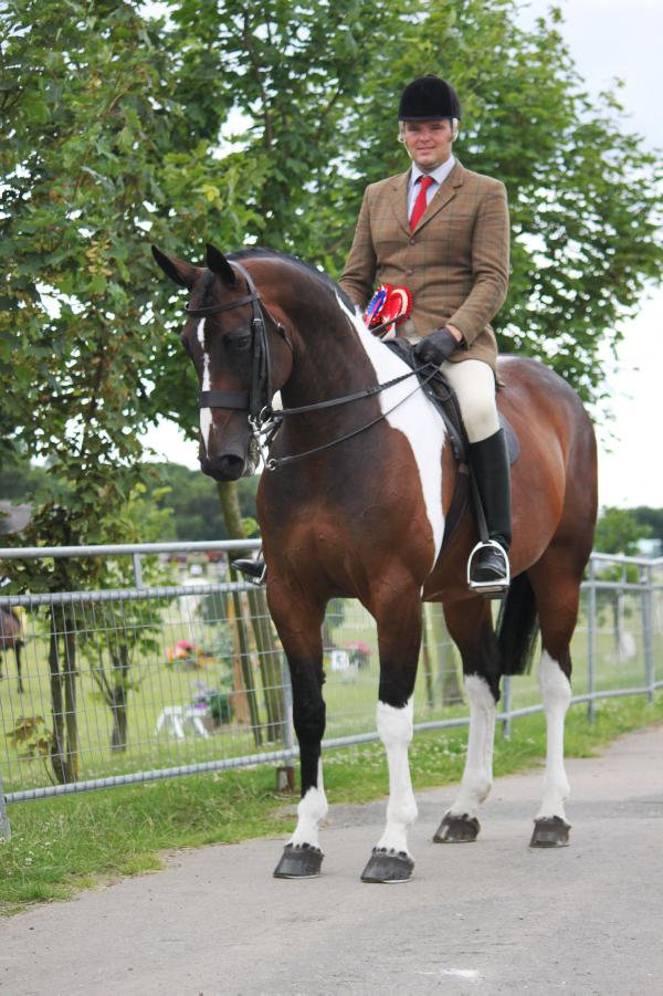 Shear Impulse set for Horse of the Year Show