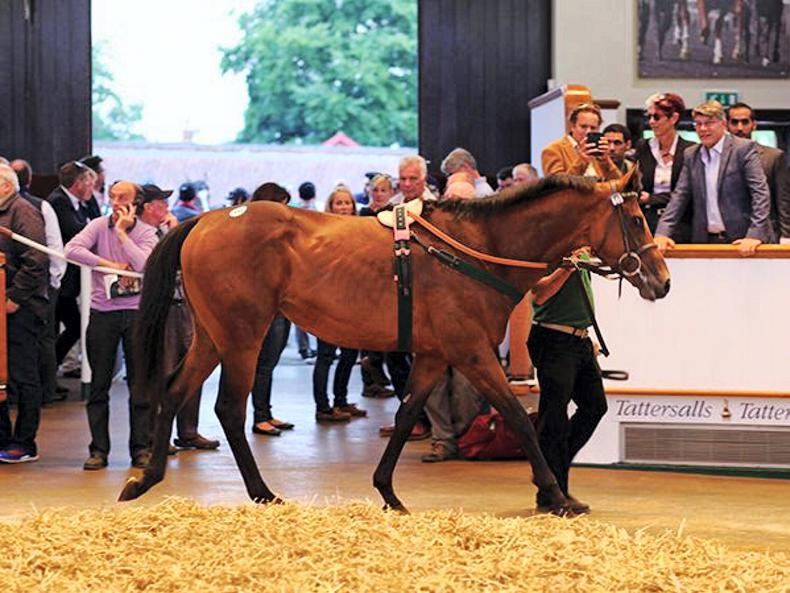 TATTERSALLS JULY SALE: Records beckon for red-hot July Sale