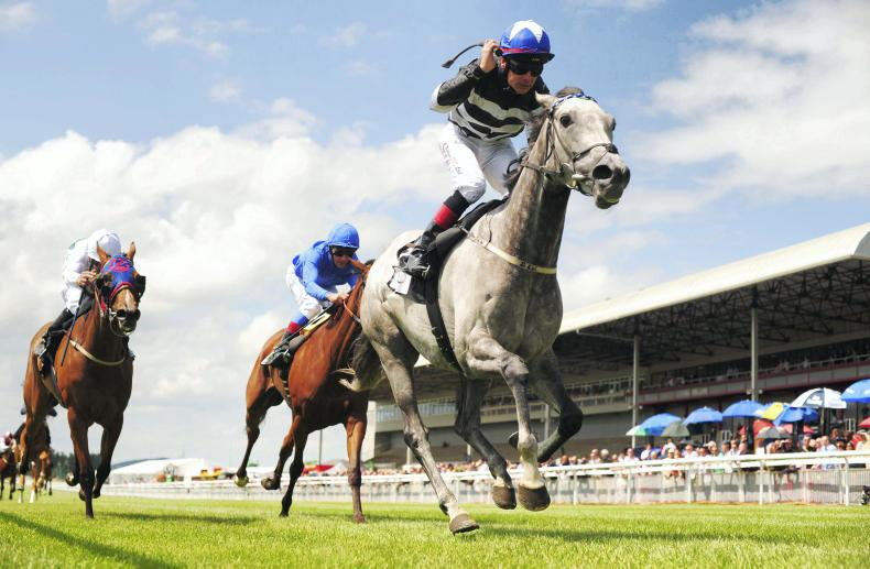 HORSE SENSE: Research reveals whether fillies improve when racing in foal