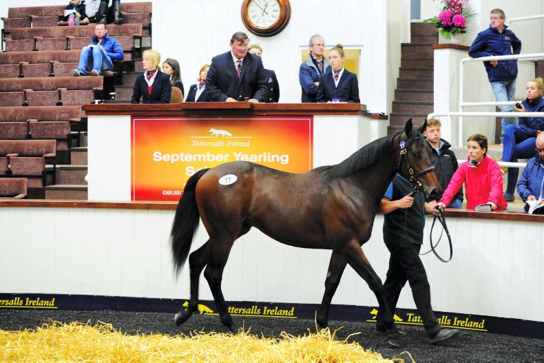 TATTERSALLS IRELAND SEPTEMBER SALE: Last year's crop have won 100 races to date