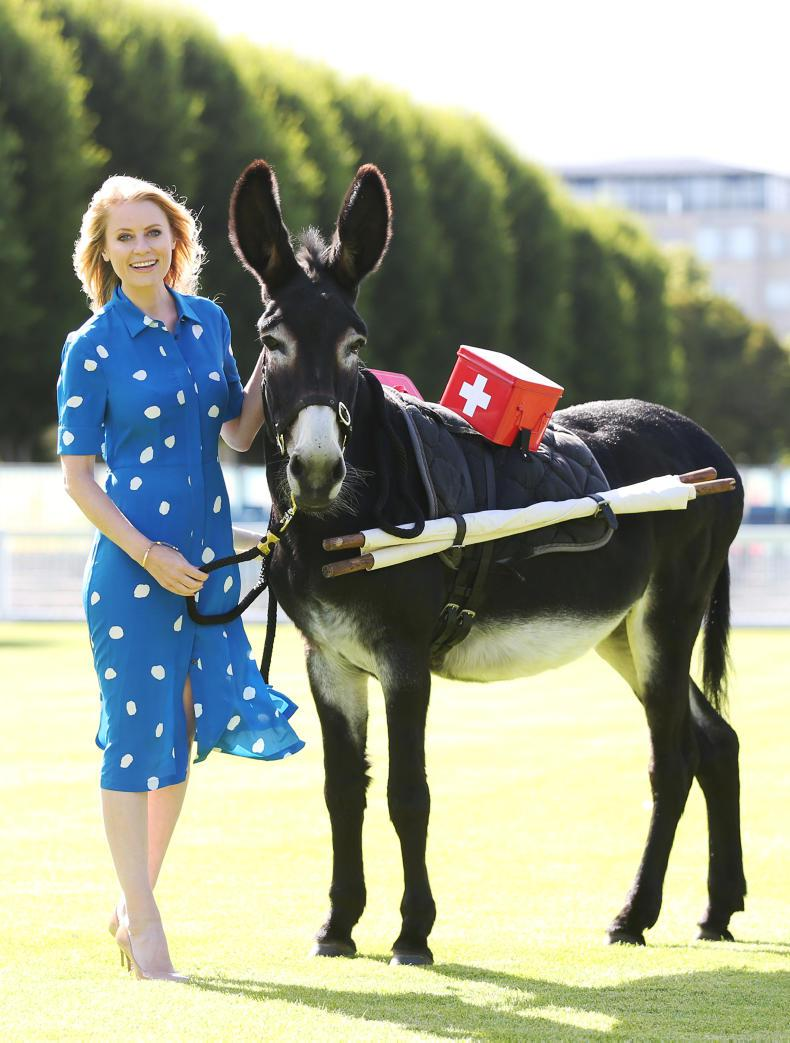 DUBLIN HORSE SHOW 2017:   Donkeys close to Rachel's heart!