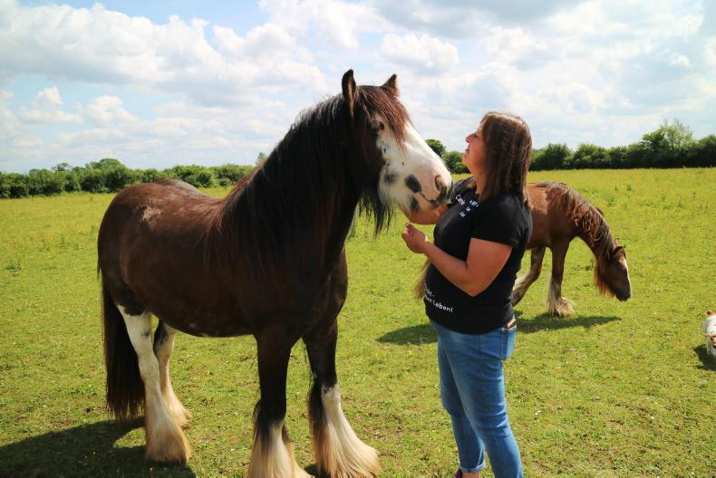 HORSE SENSE: Saving Ireland's forgotten horses from slaughter