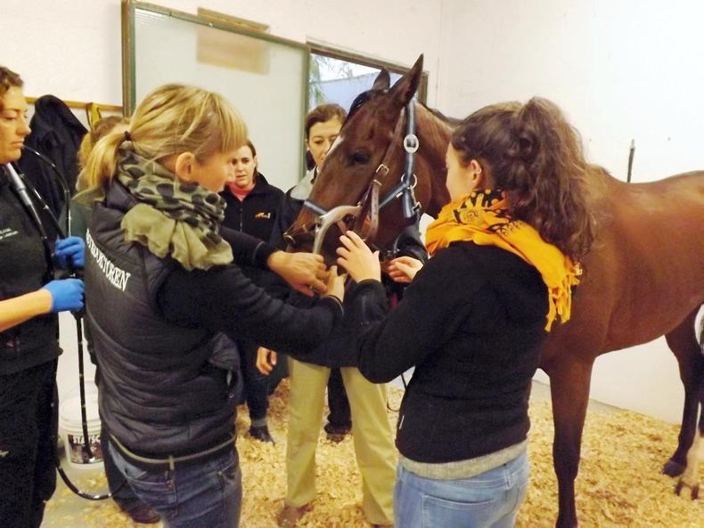 HORSE SENSE: Diet can help manage gastric ulcer syndrome