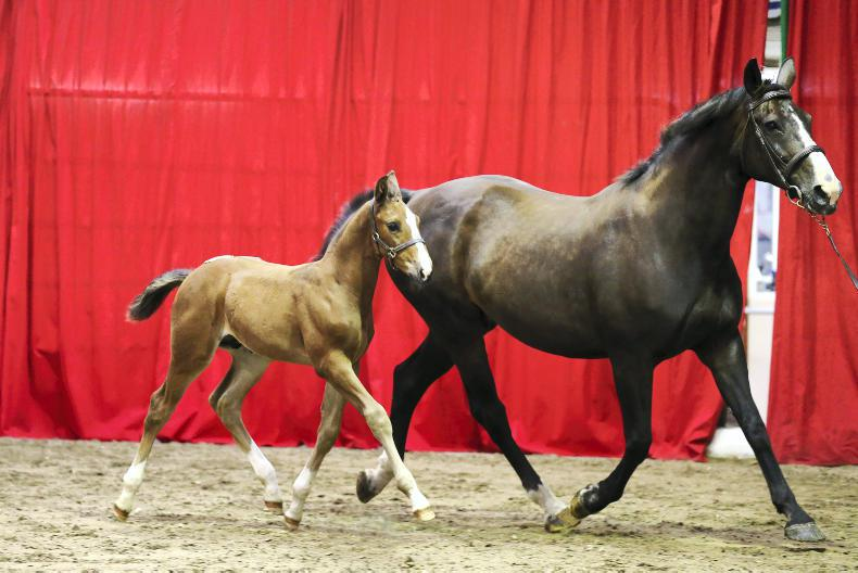 NEWS:  Quality foals on offer at Cavan