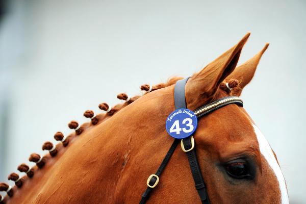 Sport horse strategy delayed until September