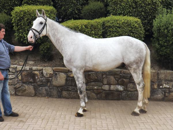 Top price of €5,500 at Cavan