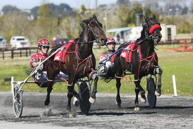 HARNESS RACING: Kanes ready and able for Delaney weekend