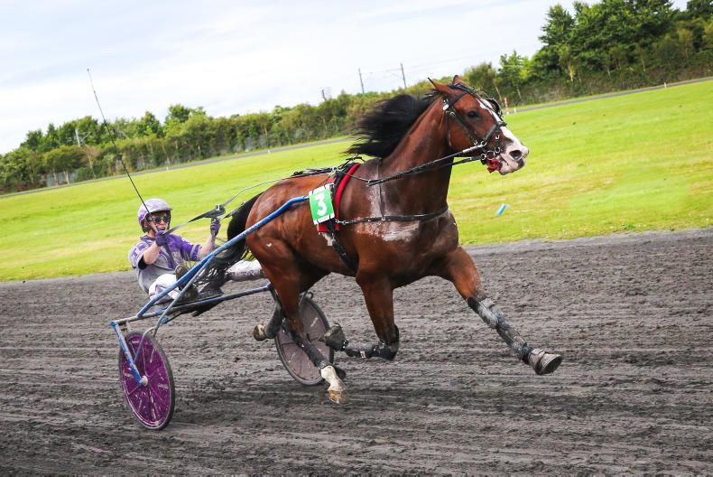 HARNESS RACING: Team Dunne on Road to success