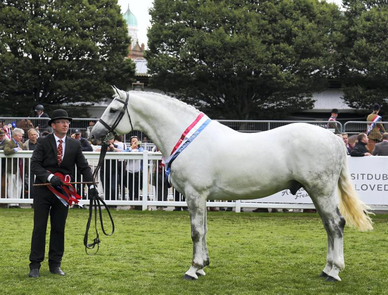 DUBLIN HORSE SHOW 2017:  Regal win and Irish Draught double for Cappa Stud