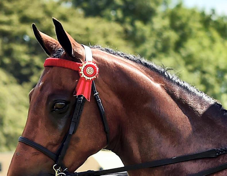 DUBLIN HORSE SHOW 2017: First time very lucky for Melvins