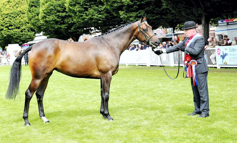 DUBLIN HORSE SHOW 2017:   Flogas Liqueur lights up RDS