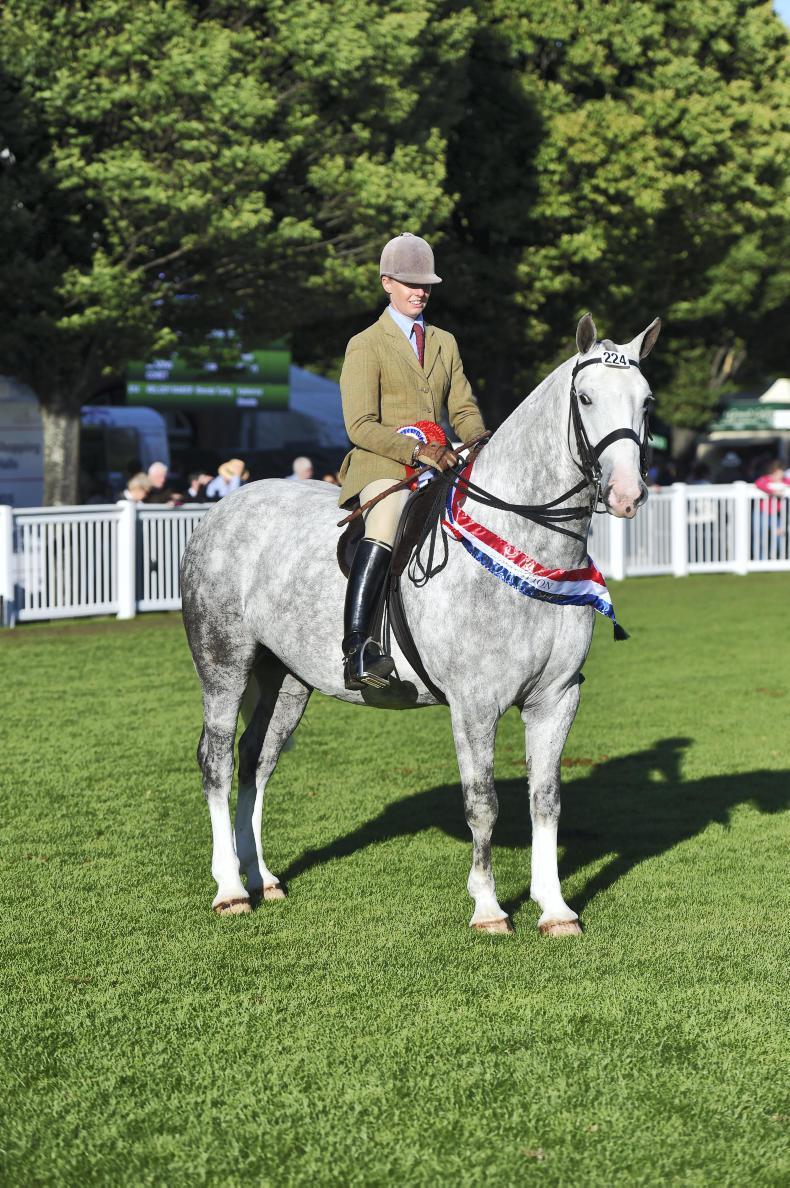 DUBLIN HORSE SHOW 2017:  Top cob honours for Randalstown Raffles