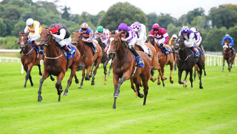 GOWRAN PARK WEDNESDAY: Alluringly gets her turn
