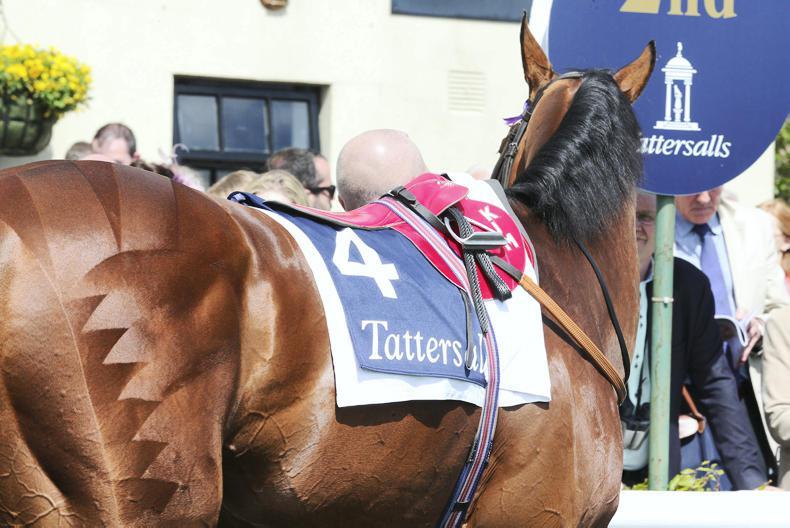 HORSE SENSE: Quarter marks: a step-by-step guide