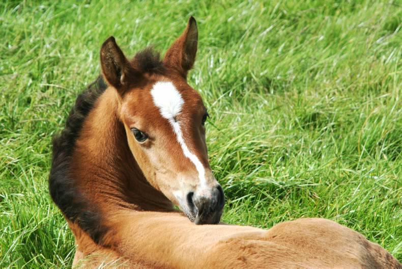 FOALING  2016: Your comprehensive foaling checklist