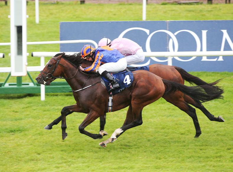 SIMON ROWLANDS: Rostropovich best of Curragh juveniles