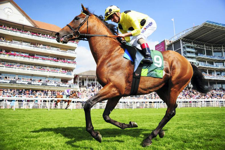Postponed to stand at Dalham Hall Stud in 2018