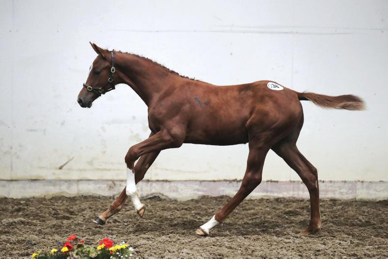 GORESBRIDGE SALES PREVIEW: Select foals (16) set to attract strong interest