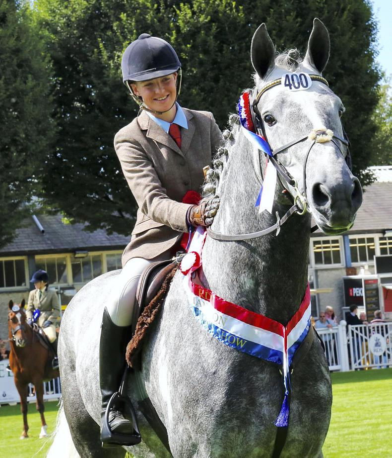 PONY TALES:  Arena UK honours for Gortfree Lakeside Lad