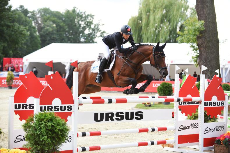 FEATURE: Hale bob boosts German hopes in WBFSH studbook race