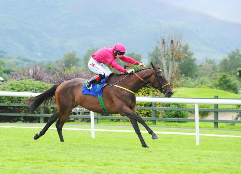 Falcon swoops to conquer in the Kingdom Gold Cup
