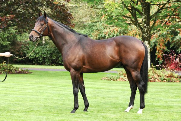 Canford Cliffs offers wonderful outcross pedigree