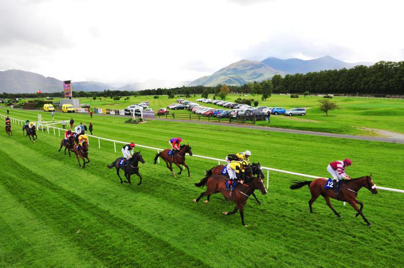 Horse Racing Ireland launches new racehorse ownership website