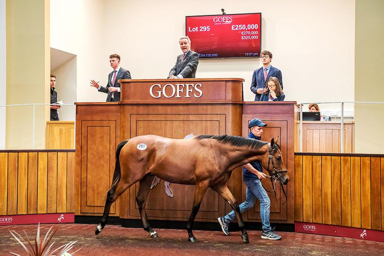 £250,000 Dark Angel colt tops day two of record-breaking Goffs UK sale