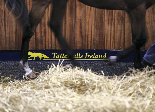 New classes at Tattersalls Ireland July show