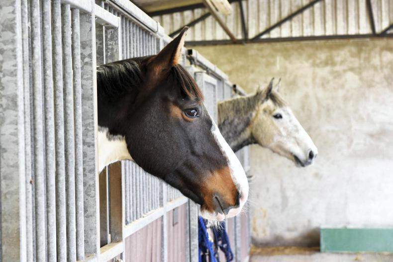 Upcoming CAFRE equine courses