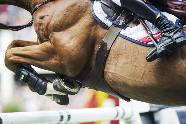 Summer fun for Showjumping Ireland