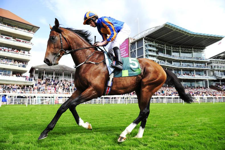 DONN McCLEAN: Quality Champion Stakes field shapes up