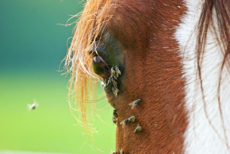 HORSE SENSE: Flies are worse than ever this year