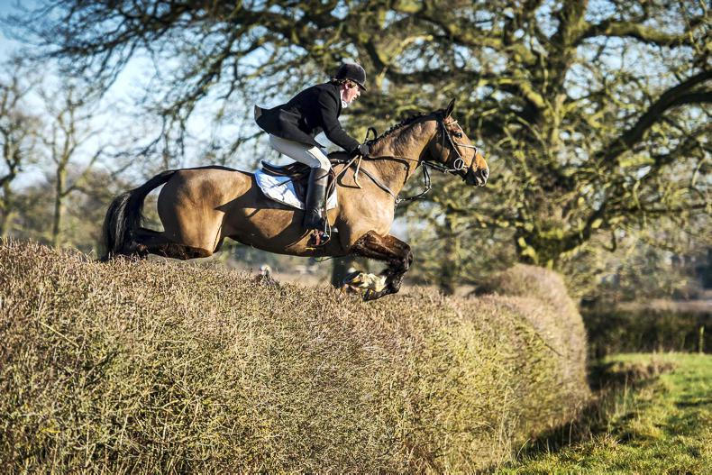 HORSE SENSE HUNTING: Developing the 'fifth leg'